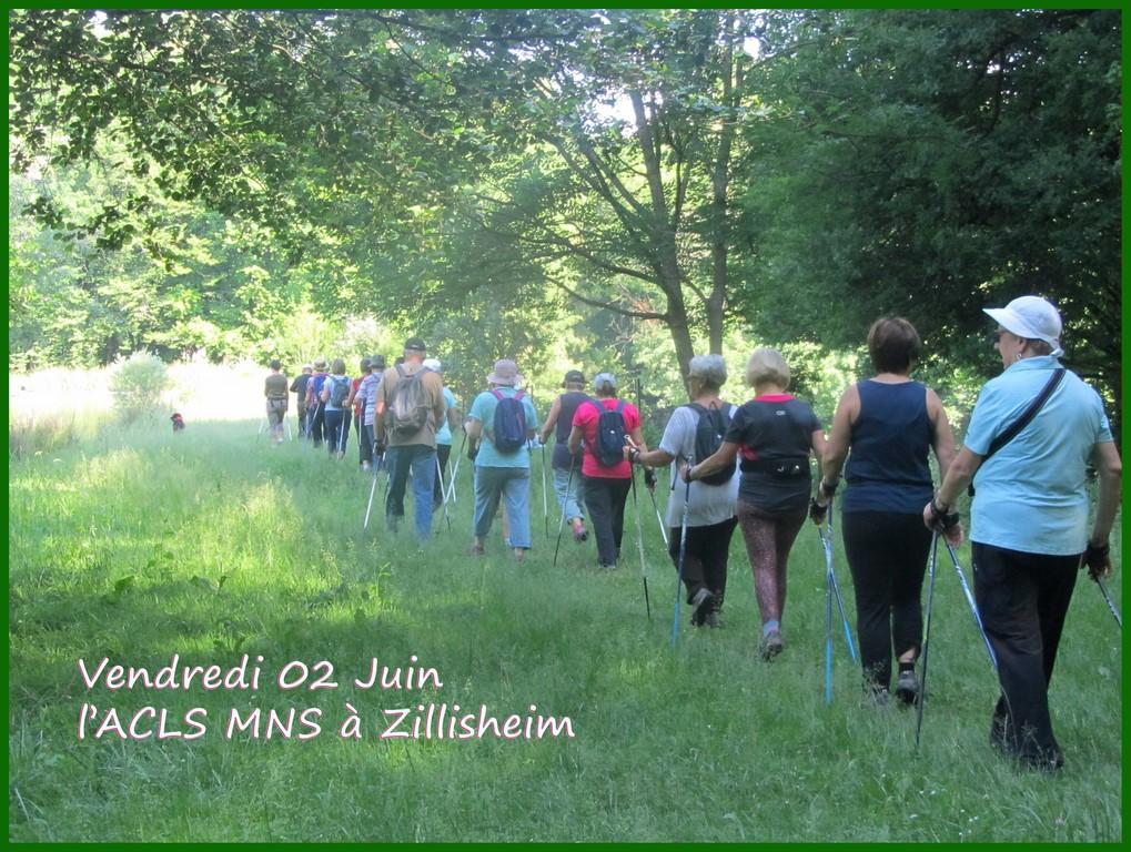 Le Tour de l'étang de Zillisheim (Copier).jpg