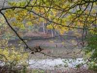 un des nombreux étangs de Bisel