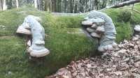 Amadouviers sur vieux troncs d'arbre